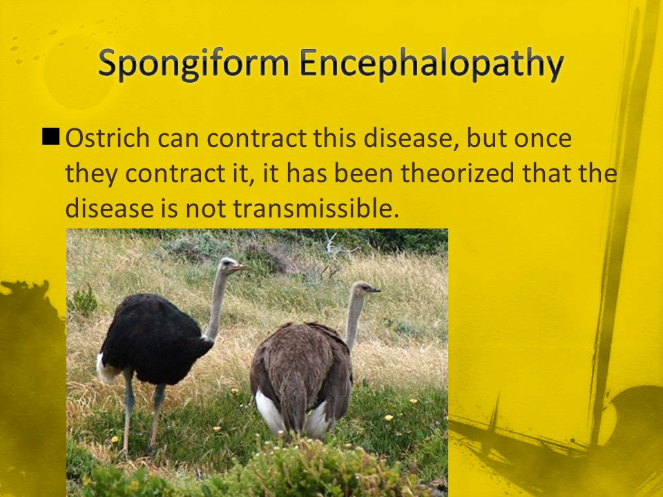 Spongiform Encephalopathy