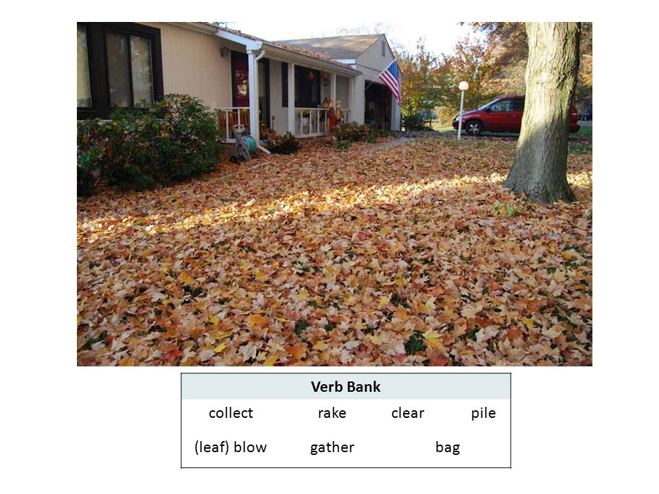 Verb Bank collect rake clear pile (leaf) blow gather bag