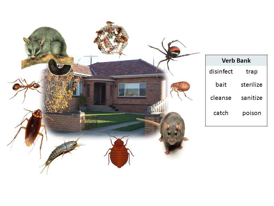Verb Bank disinfect trap bait sterilize cleanse sanitize catch poison