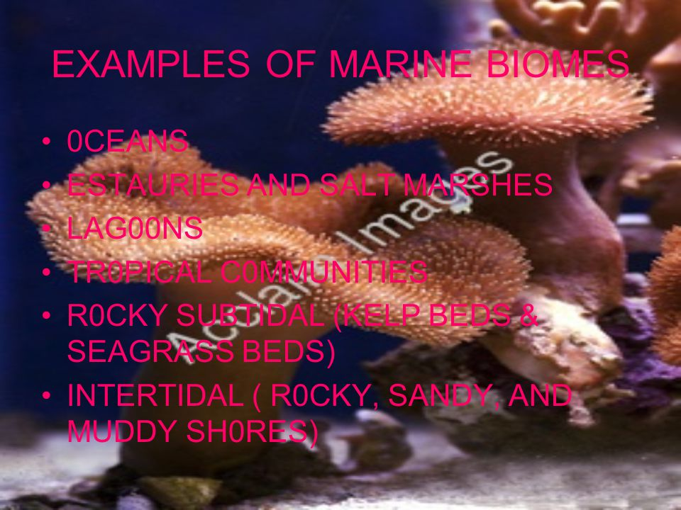 EXAMPLES OF MARINE BIOMES