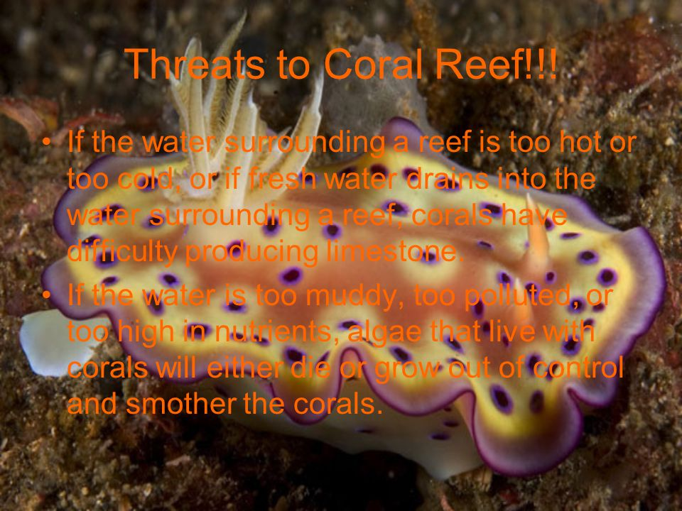 Threats to Coral Reef!!!