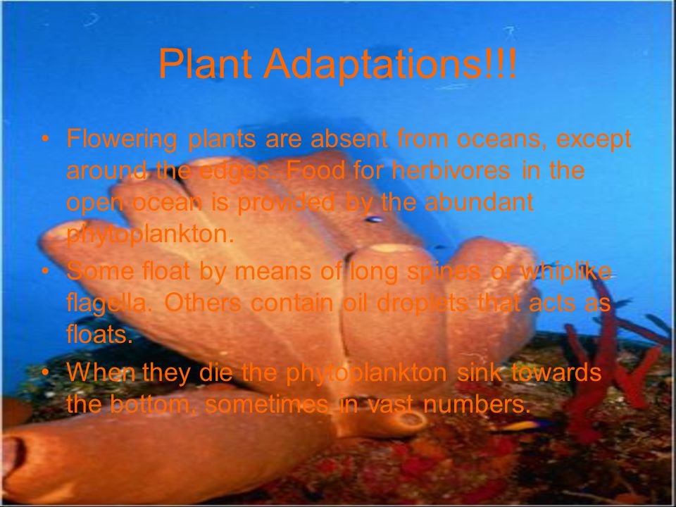 Plant Adaptations!!!