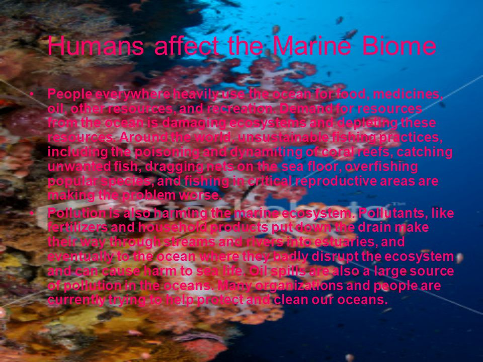Humans affect the Marine Biome