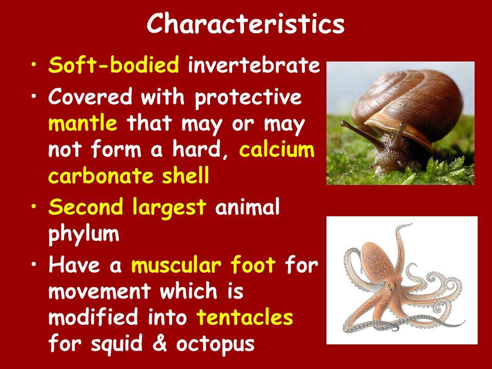 Characteristics Soft-bodied invertebrate