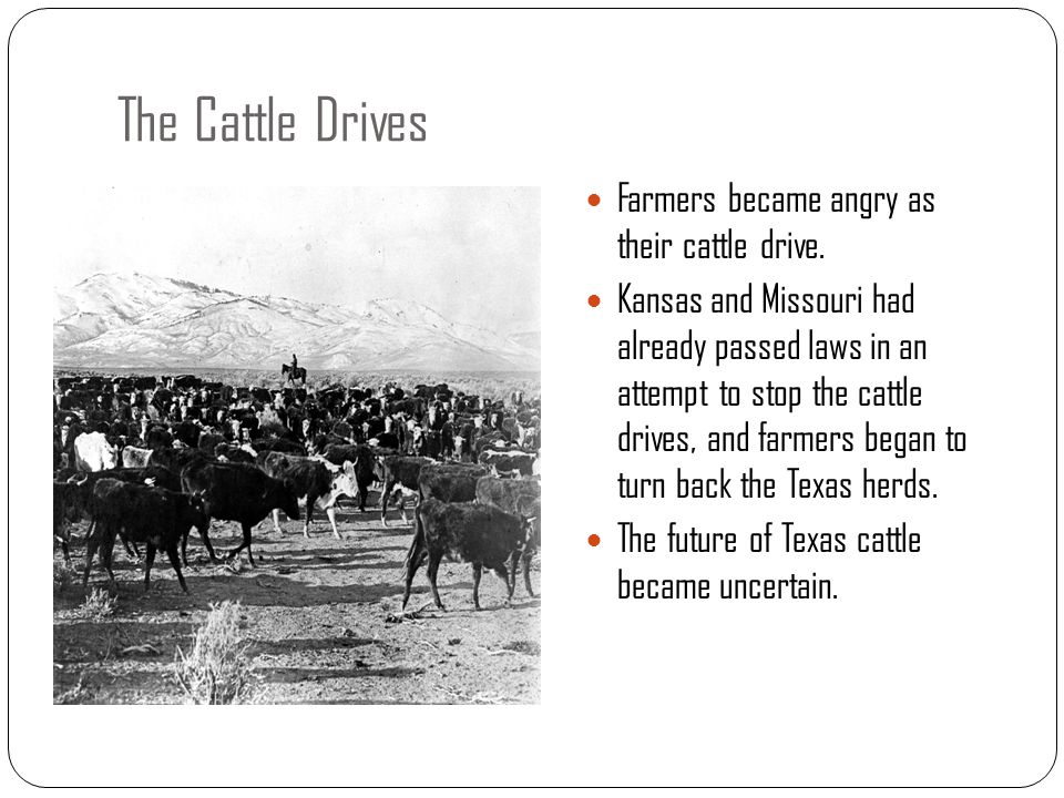 The Cattle Drives Farmers became angry as their cattle drive.