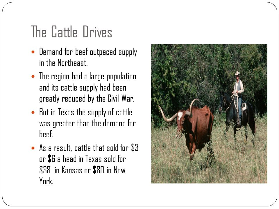 The Cattle Drives Demand for beef outpaced supply in the Northeast.