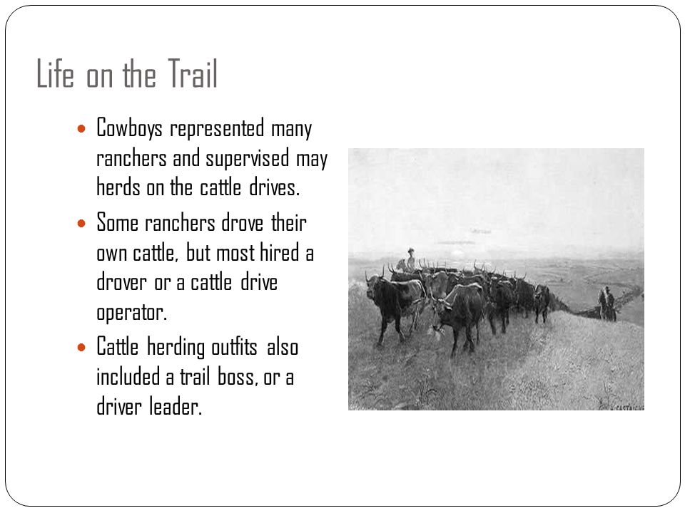 Life on the Trail Cowboys represented many ranchers and supervised may herds on the cattle drives.