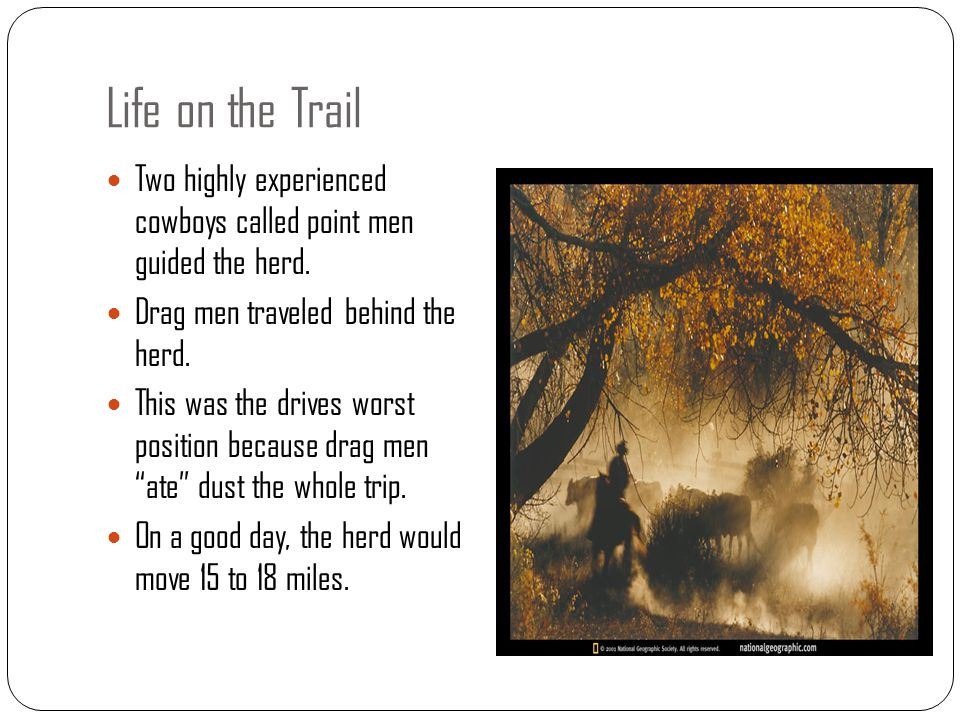 Life on the Trail Two highly experienced cowboys called point men guided the herd. Drag men traveled behind the herd.