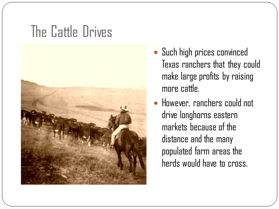 The Cattle Drives Such high prices convinced Texas ranchers that they could make large profits by raising more cattle.