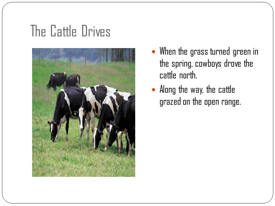 The Cattle Drives When the grass turned green in the spring, cowboys drove the cattle north.