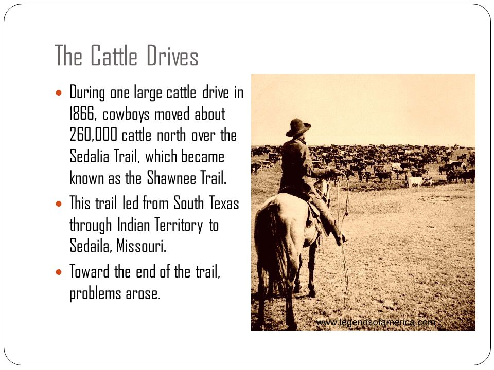 The Cattle Drives