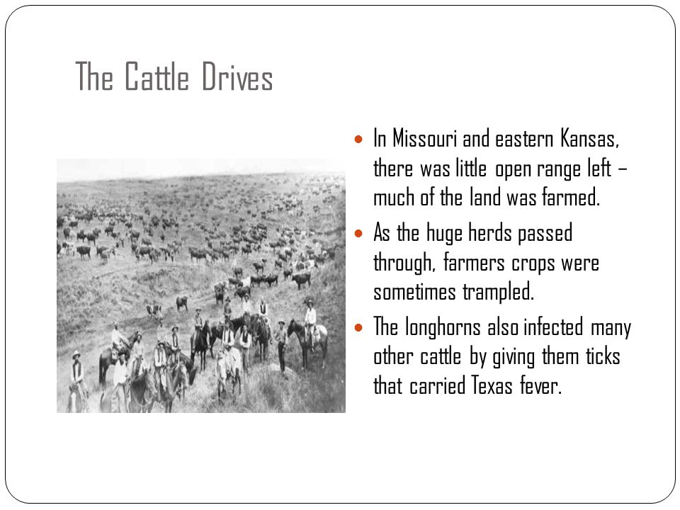 The Cattle Drives In Missouri and eastern Kansas, there was little open range left – much of the land was farmed.