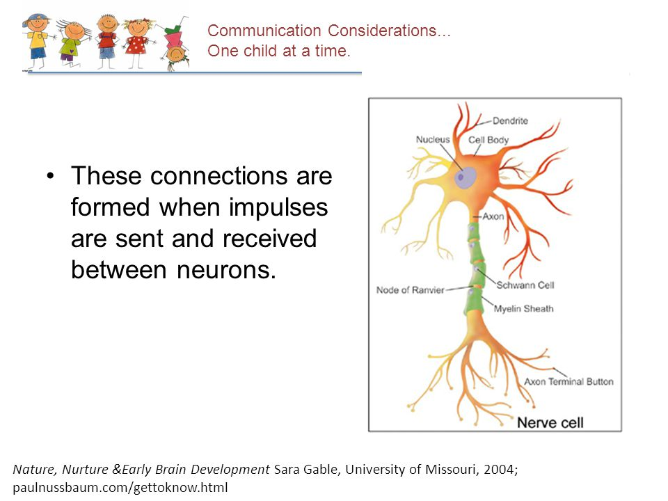 These connections are formed when impulses are sent and received between neurons.