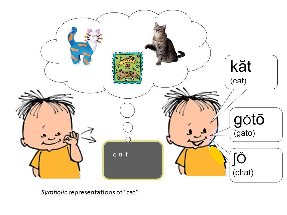 kӑt gŎtō ʃŎ (cat) (gato) (chat) c a t