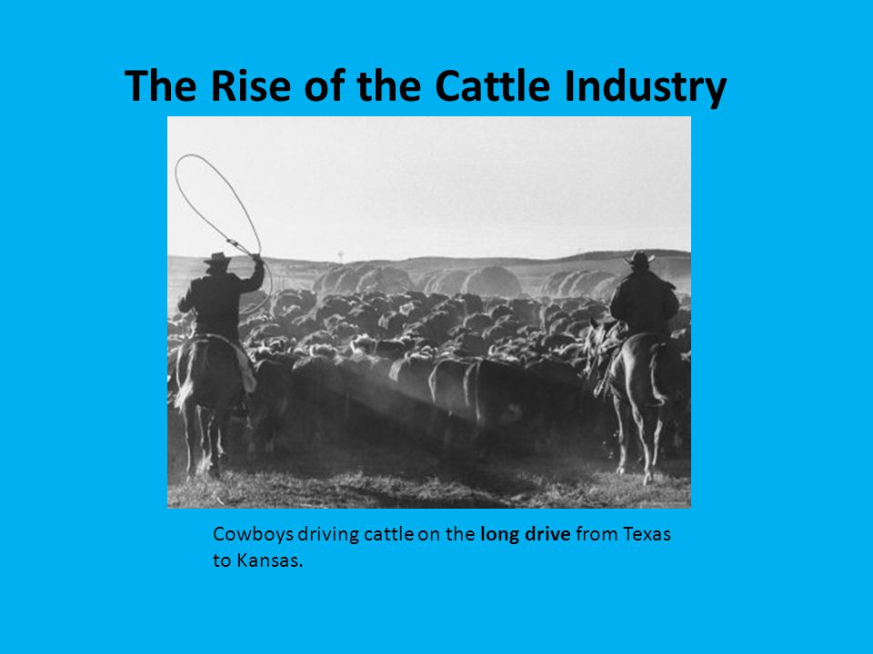 The Rise of the Cattle Industry