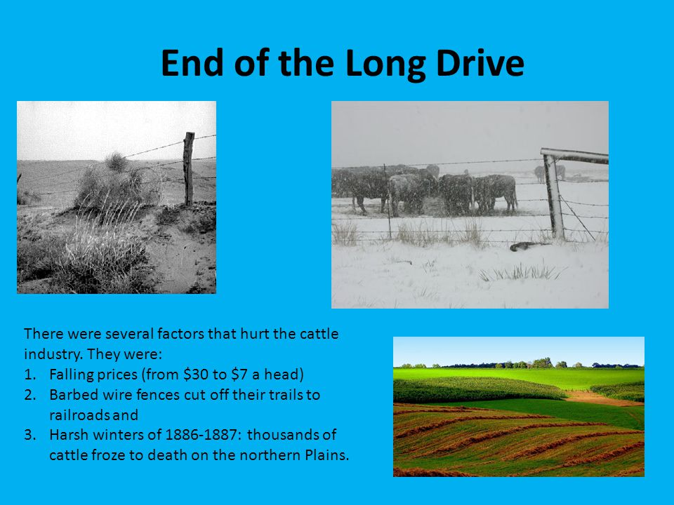 End of the Long Drive There were several factors that hurt the cattle industry. They were: Falling prices (from $30 to $7 a head)