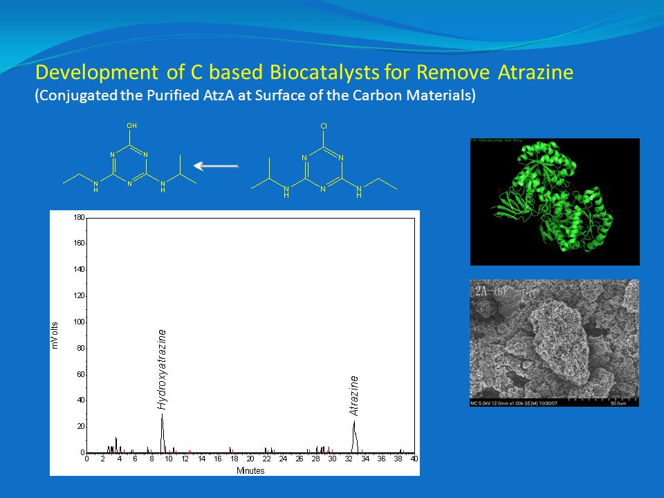 Development of C based Biocatalysts for Remove Atrazine (Conjugated the Purified AtzA at Surface of the Carbon Materials)