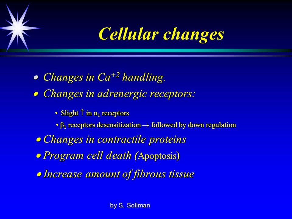 Cellular changes • Slight  in α1 receptors