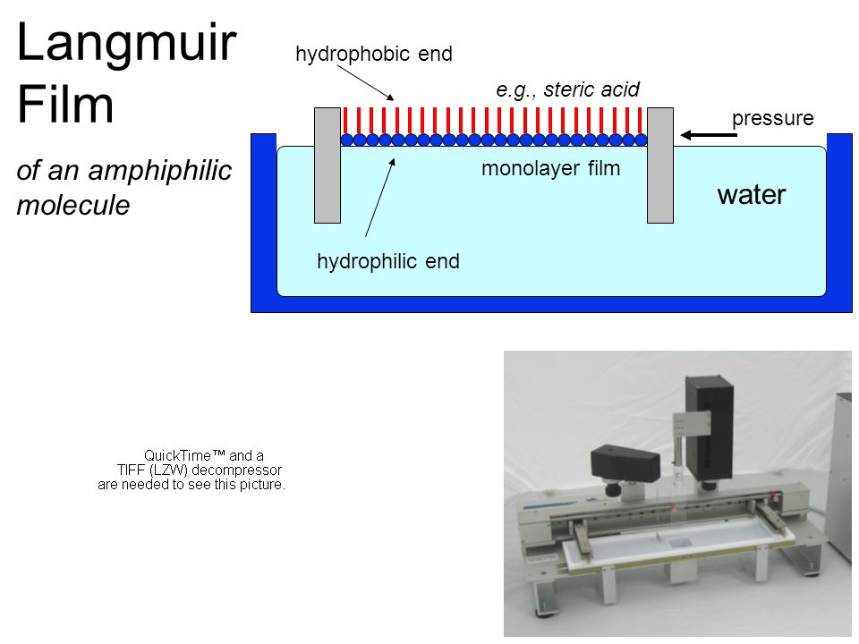Langmuir Film of an amphiphilic molecule water hydrophobic end