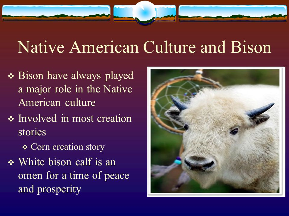Native American Culture and Bison