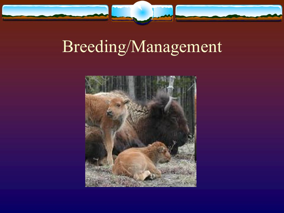 Breeding/Management