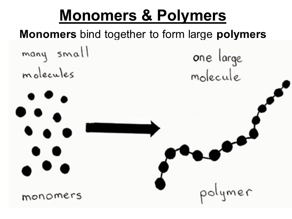Monomers bind together to form large polymers