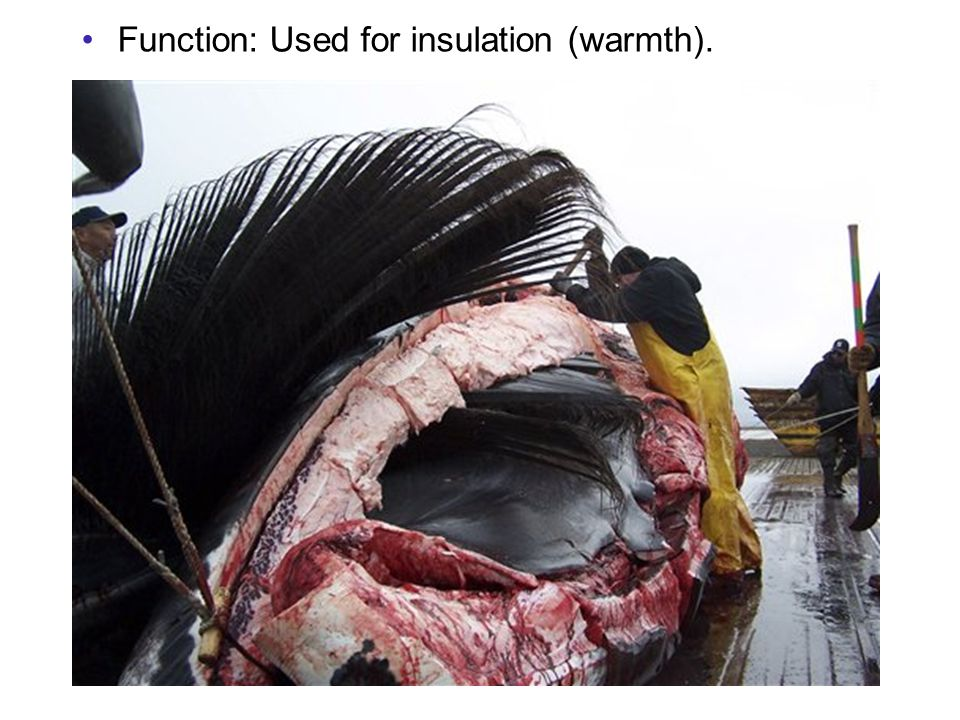 Function: Used for insulation (warmth).