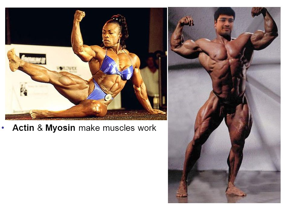 Actin & Myosin make muscles work