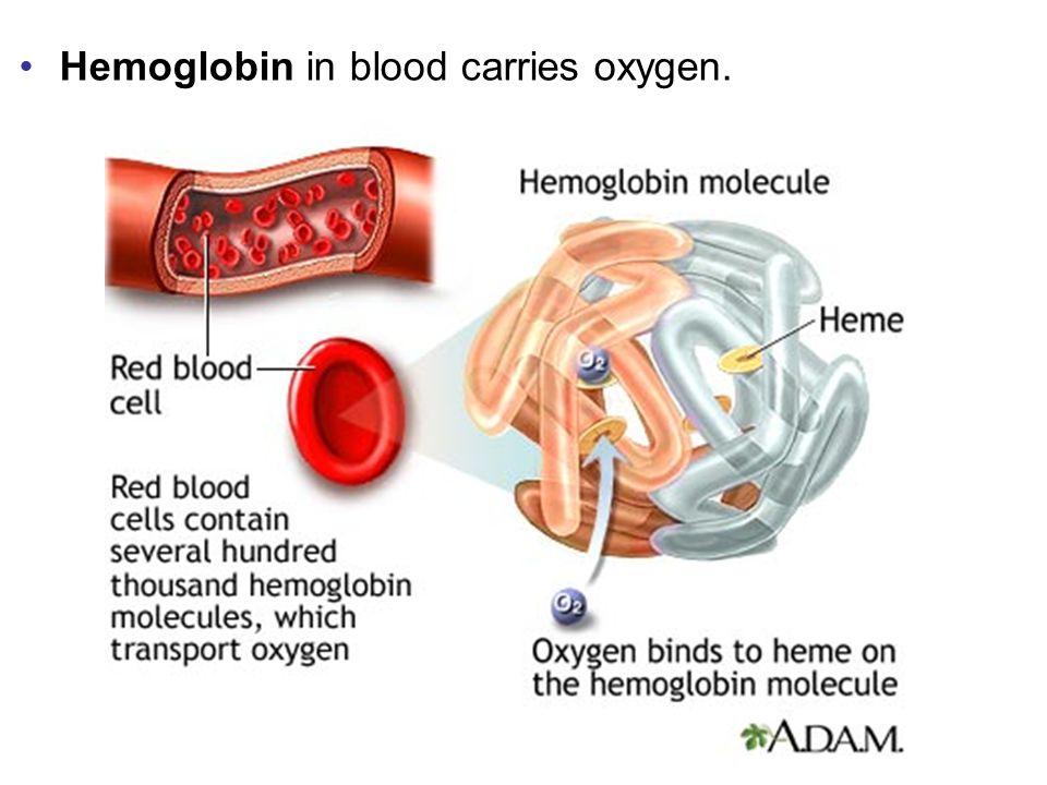 Hemoglobin in blood carries oxygen.