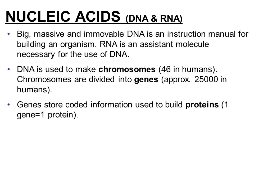 NUCLEIC ACIDS (DNA & RNA)