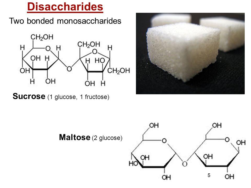 Two bonded monosaccharides