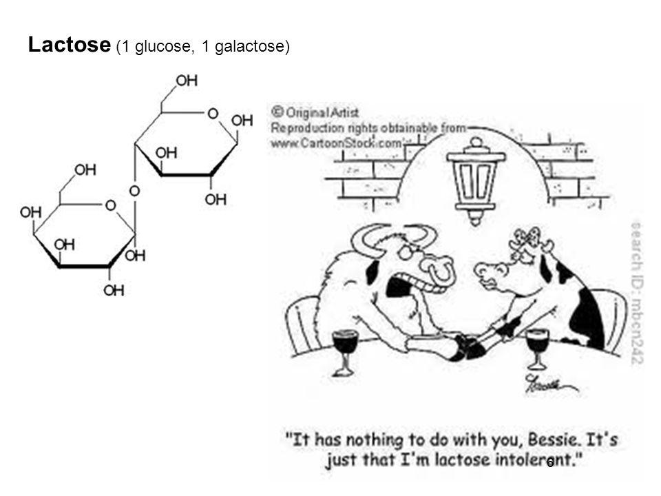 Lactose (1 glucose, 1 galactose)
