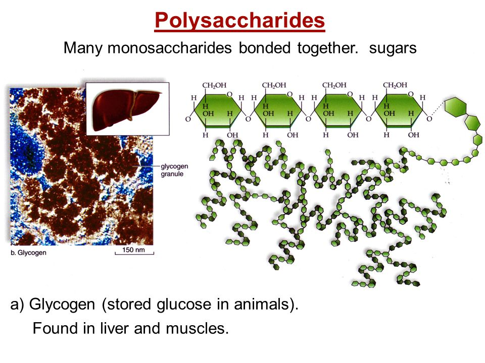 Many monosaccharides bonded together. sugars