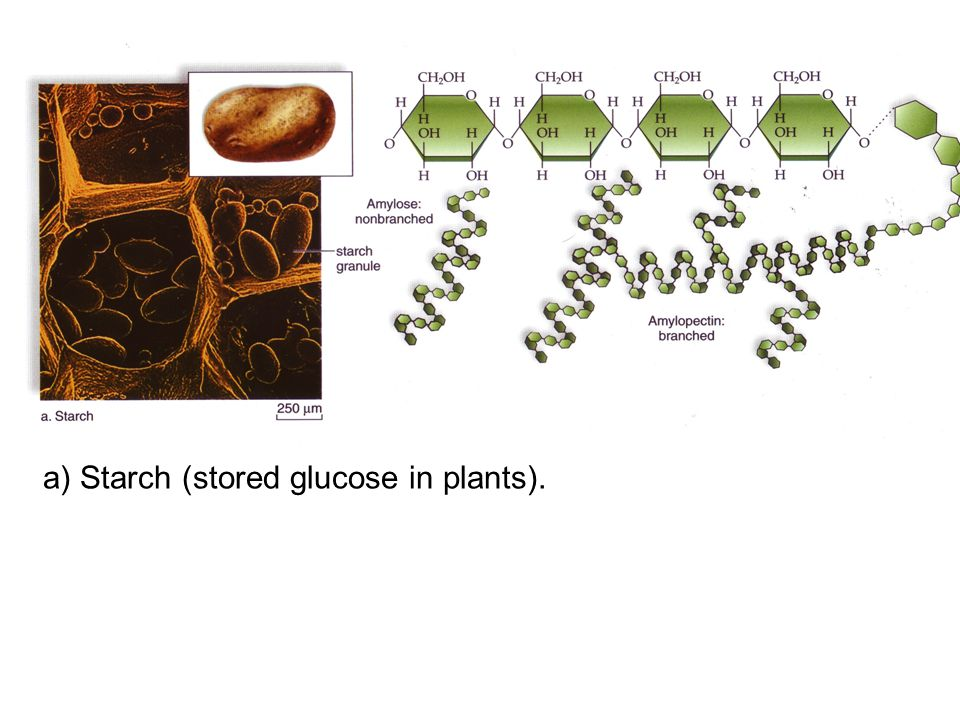 a) Starch (stored glucose in plants).