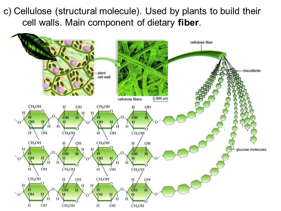 c) Cellulose (structural molecule)