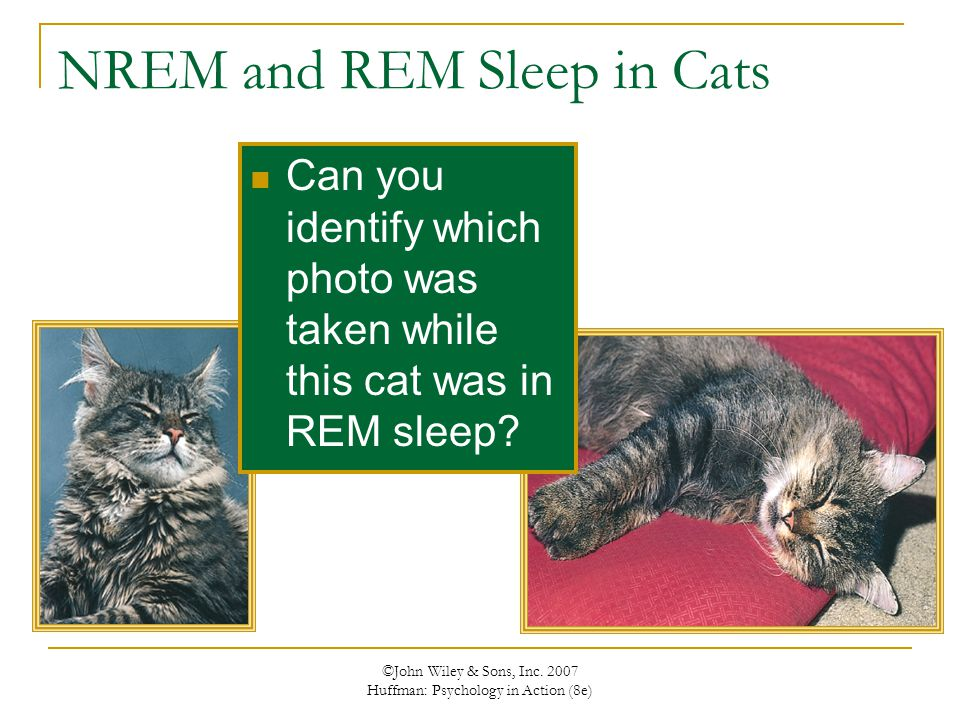 NREM and REM Sleep in Cats
