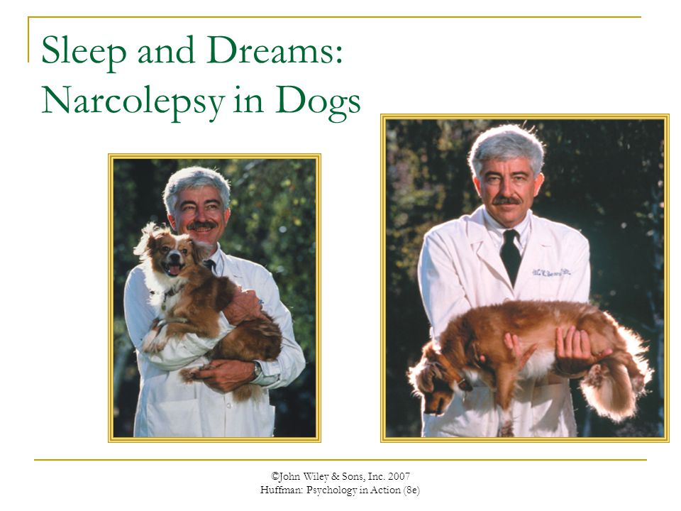 Sleep and Dreams: Narcolepsy in Dogs