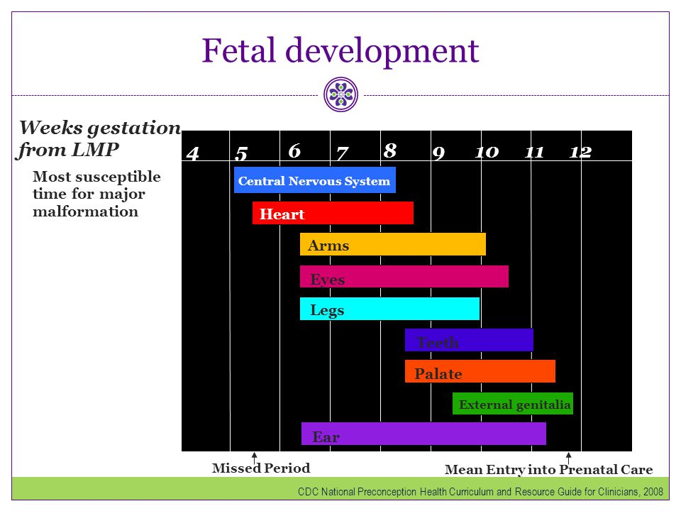 Fetal development 4 5 6 7 8 9 10 11 12 Weeks gestation from LMP