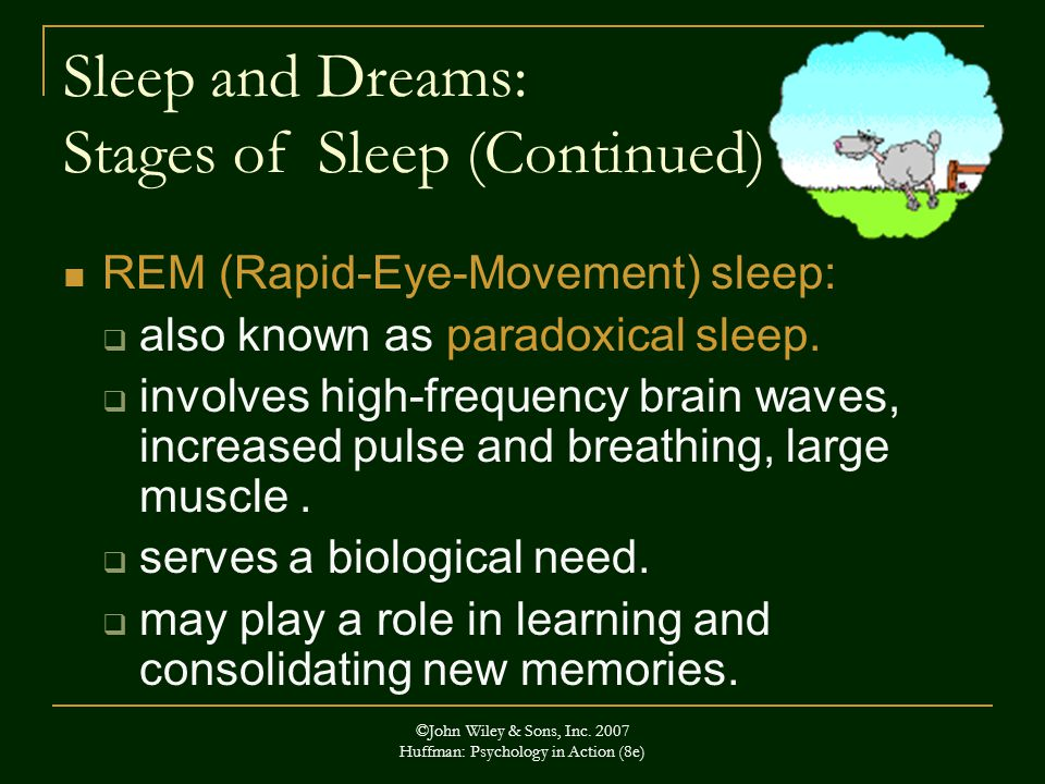 Sleep and Dreams: Stages of Sleep (Continued)