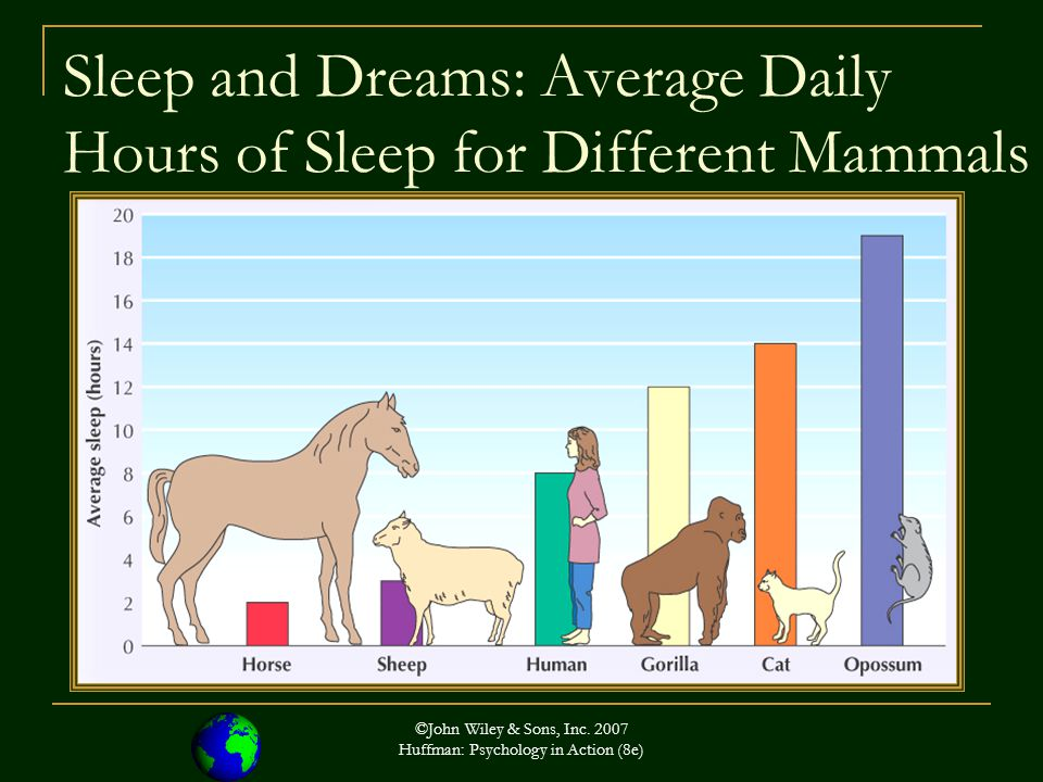 Sleep and Dreams: Average Daily Hours of Sleep for Different Mammals