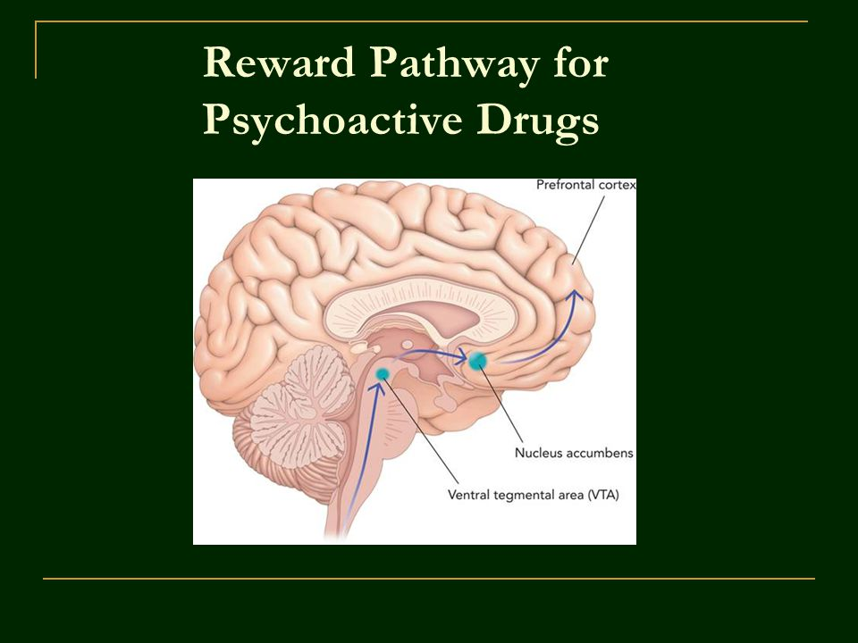 Reward Pathway for Psychoactive Drugs