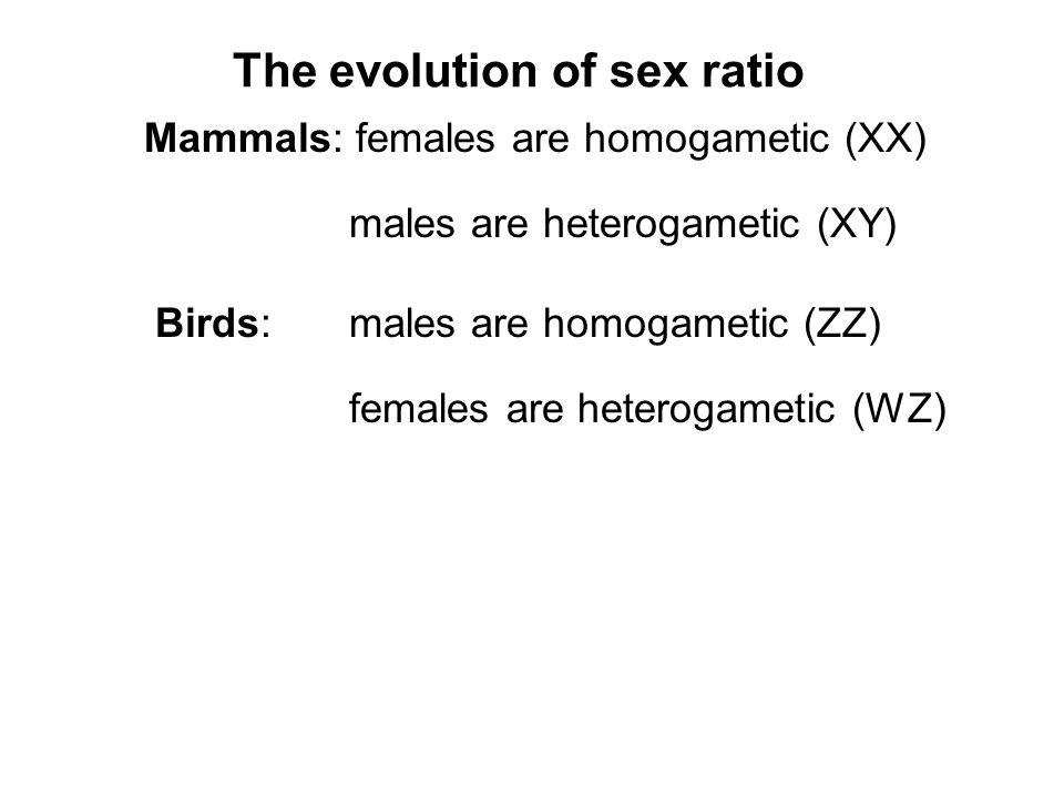 The evolution of sex ratio