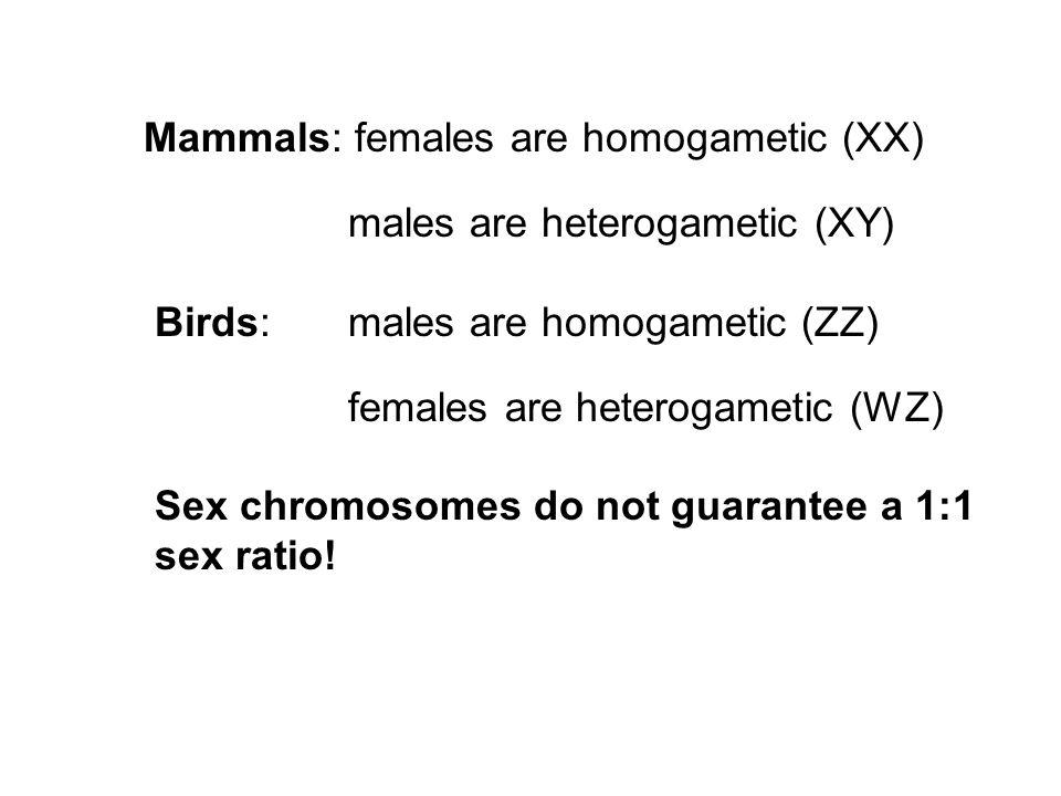 Mammals: females are homogametic (XX)