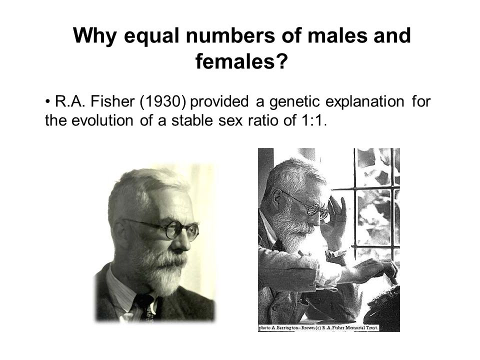 Why equal numbers of males and females