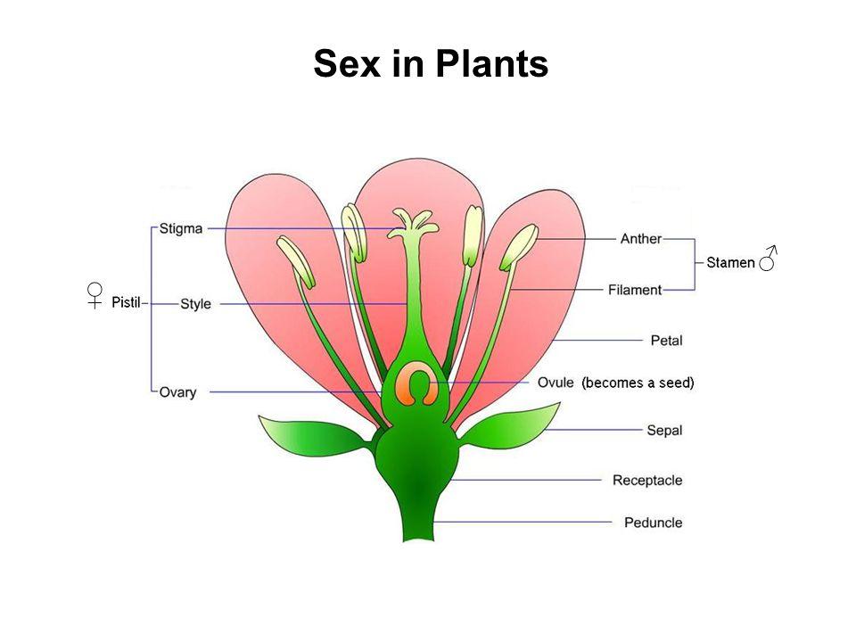 Sex in Plants ♂ ♀