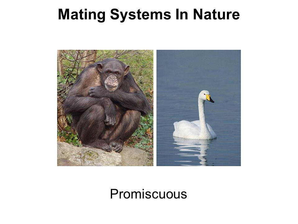 Mating Systems In Nature