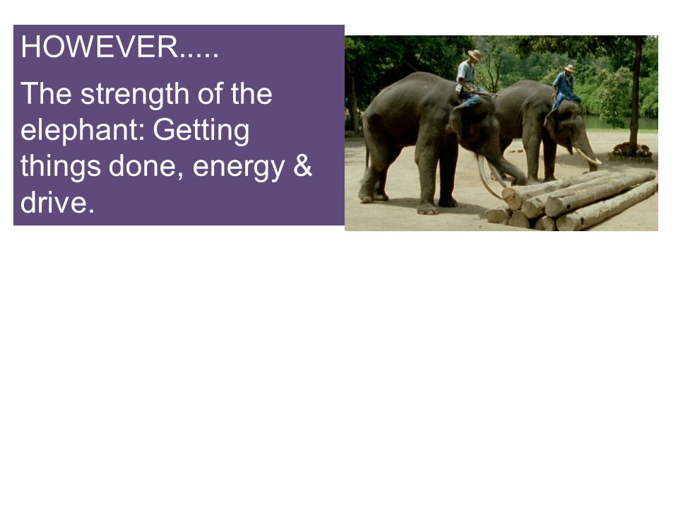 HOWEVER..... The strength of the elephant: Getting things done, energy & drive.
