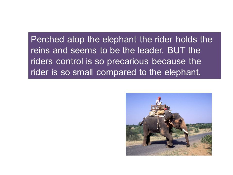 Perched atop the elephant the rider holds the reins and seems to be the leader.