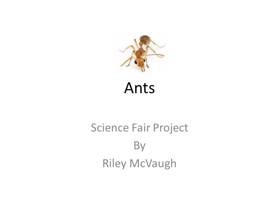 Science Fair Project By Riley McVaugh