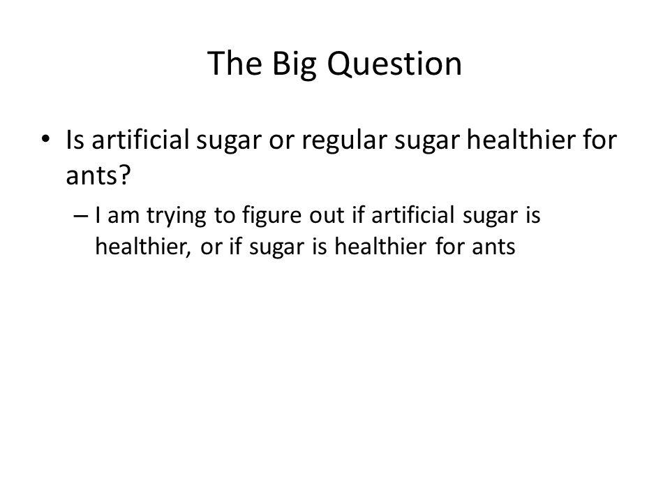 The Big Question Is artificial sugar or regular sugar healthier for ants